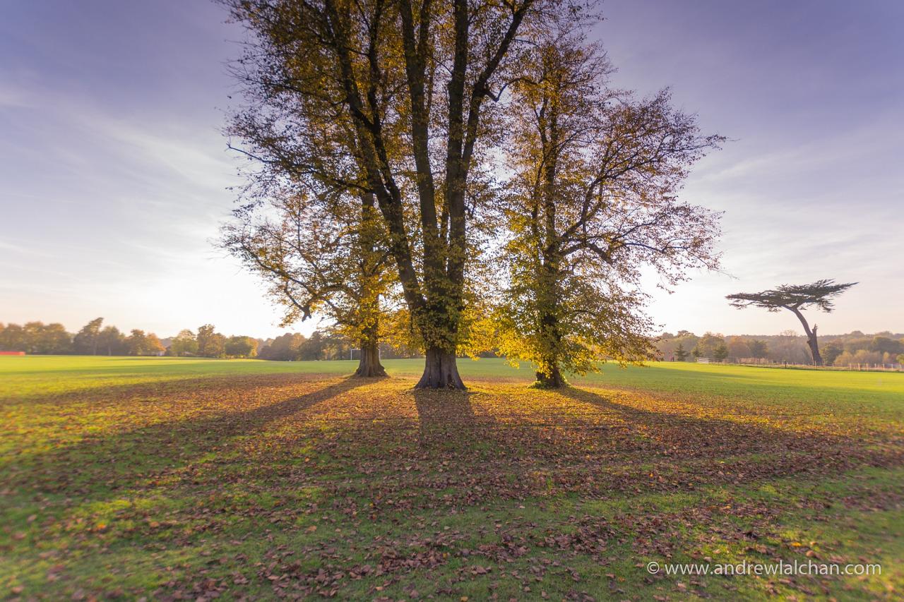 Cassiobury Park - Watford