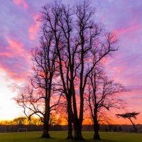 Sunset in cassiobury Park