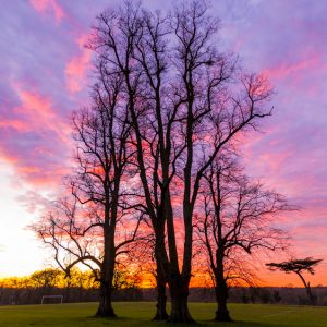 Sunset in cassiobury Park