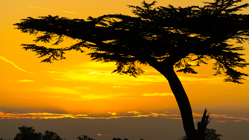 Sun Setting On The Lion King Tree Andrew Lalchan Photographer