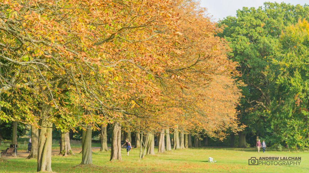 Autumn in Cassiobury Park