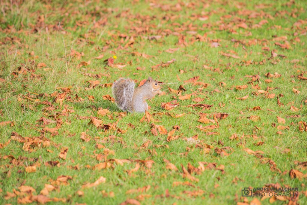 Squirrel in the autumn leaves