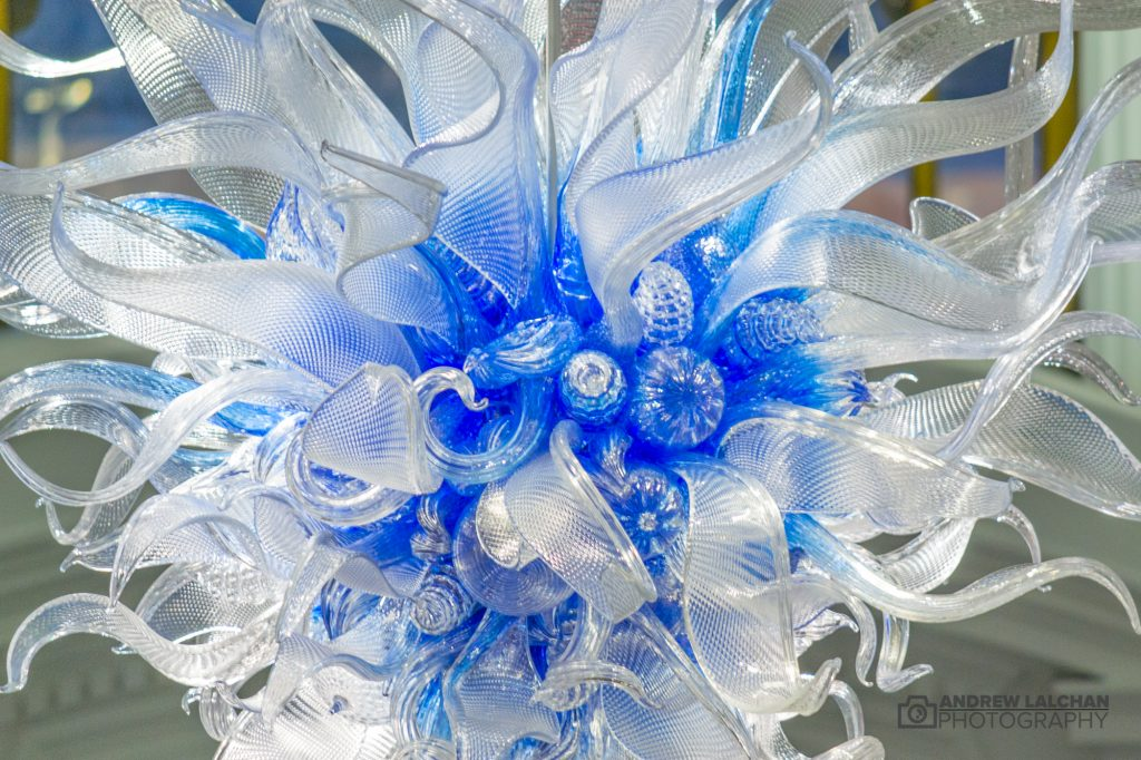 Chihuly Now at Halcyon Gallery