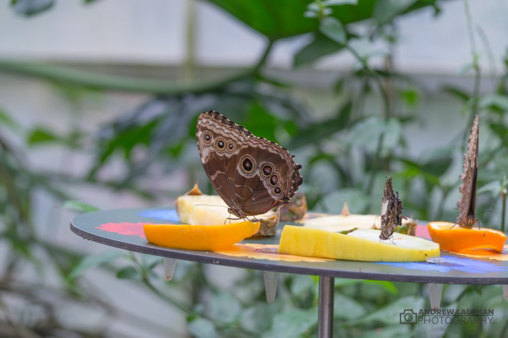 RHS Wisley - Butterfly Glasshouse