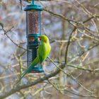 Cassiobury Park - Bird Spotting