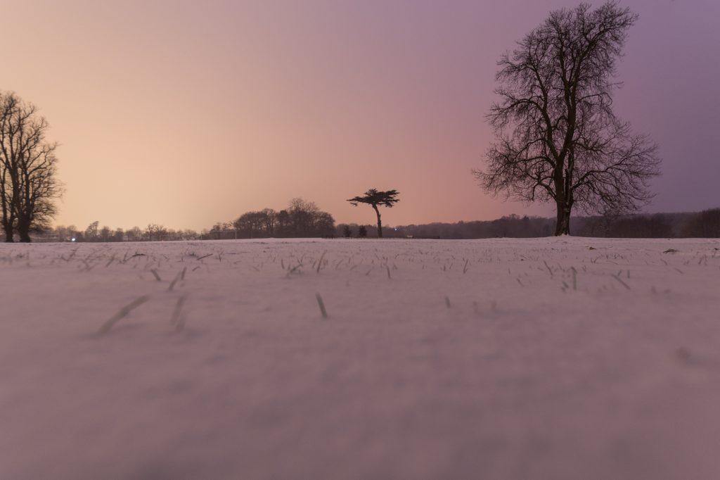 Snow fall in Cassiobury Park