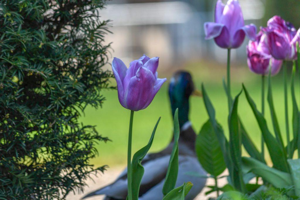 April in Watford