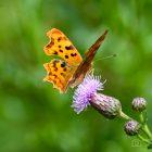 Summer of butterflies