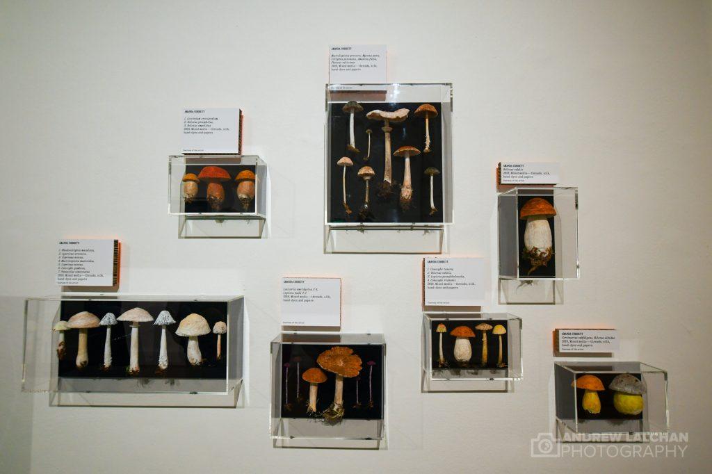 Wild world of mushrooms exhibition