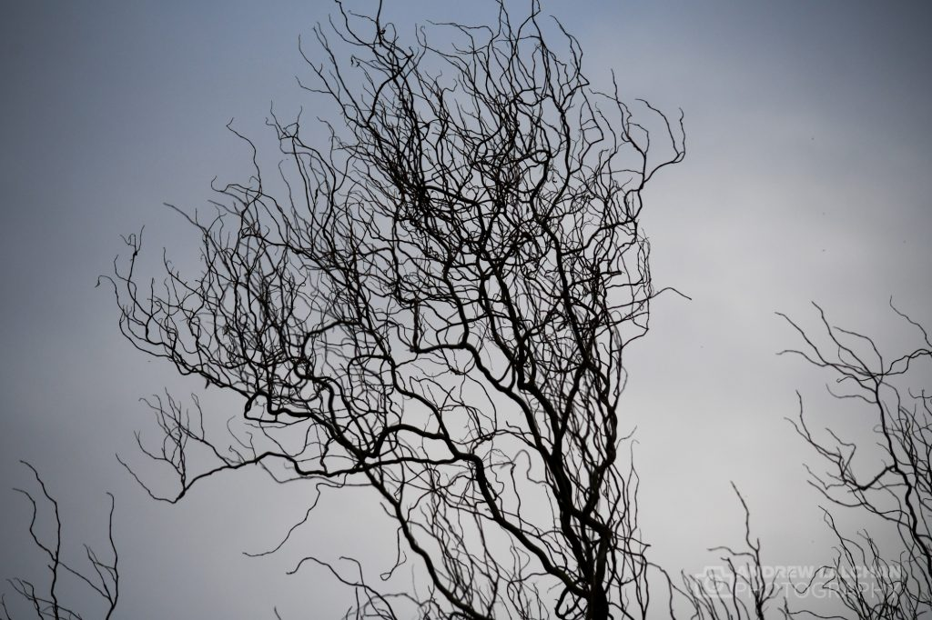 Tree branches before the shoots of spring